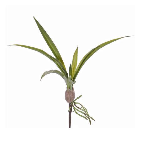 Orchid leaf Oncidium