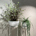 Hangplant Epiphyllum