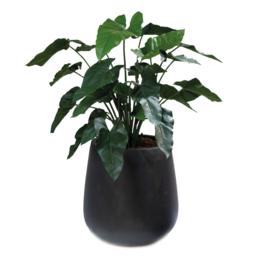 Pax XL Zwart gevuld met Philodendron H120