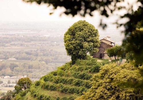 Andreola - Veneto
