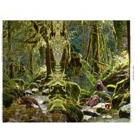 Fairy Bears - Tricotpaneel