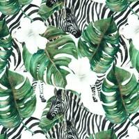 Jungle zebra