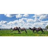 Cadeaubon voor kamelensafari