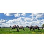 Geschenkgutschein Kamelsafari