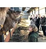 Gift voucher camel safari