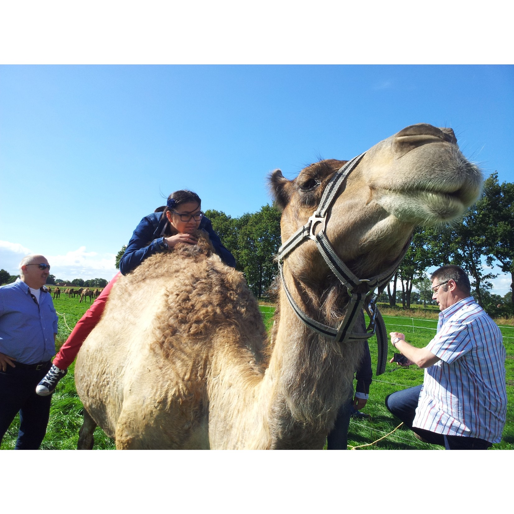 Gift voucher camel safari