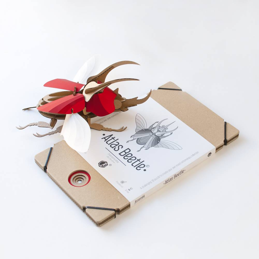 Paper Beetle / Atlas / Green