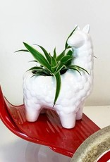 White ceramic alpaca planter