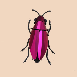 Pink paper jewel beetle assembly kit