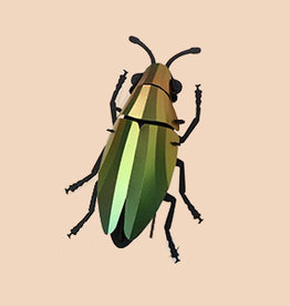 Paper Jewel Beetle / Mango