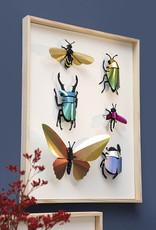 Blue paper stag beetle assemble kit