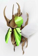 Paper Beetle / Atlas / Lime