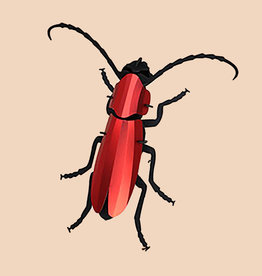 Paper Rosalia Beetle / Red