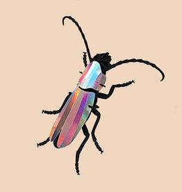 Paper Rosalia Beetle / Rainbow