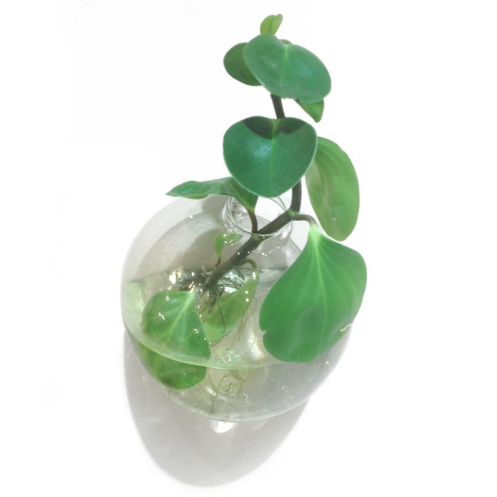 "Modern design glass wall vase Drop"""