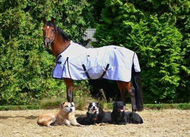 Onze paardendekens