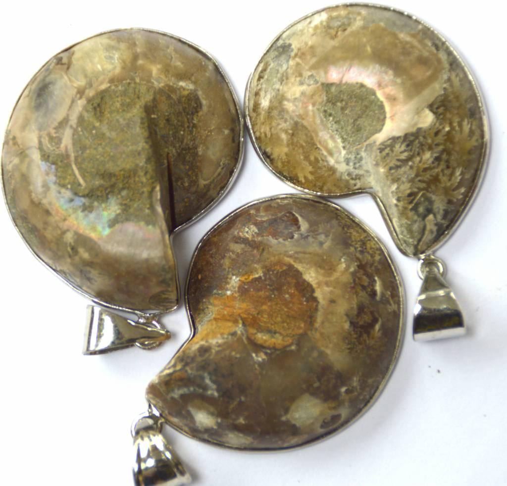 fossiler halber Ammonit eingefasst
