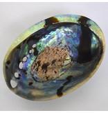 Abalone Muschel Set