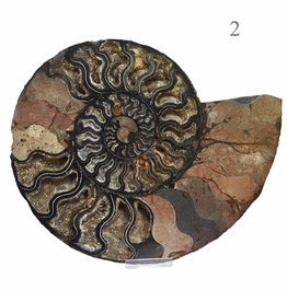 Ammonitenhälften XXL
