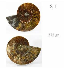 Ammonitenpaare S +M Ammonitenhälfte L