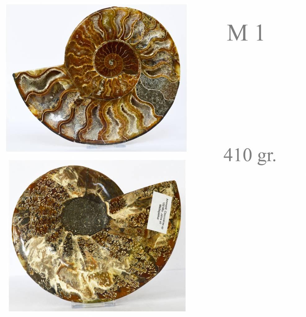 versteinerte Ammonitenfossilhälften / Ammonitenpaare
