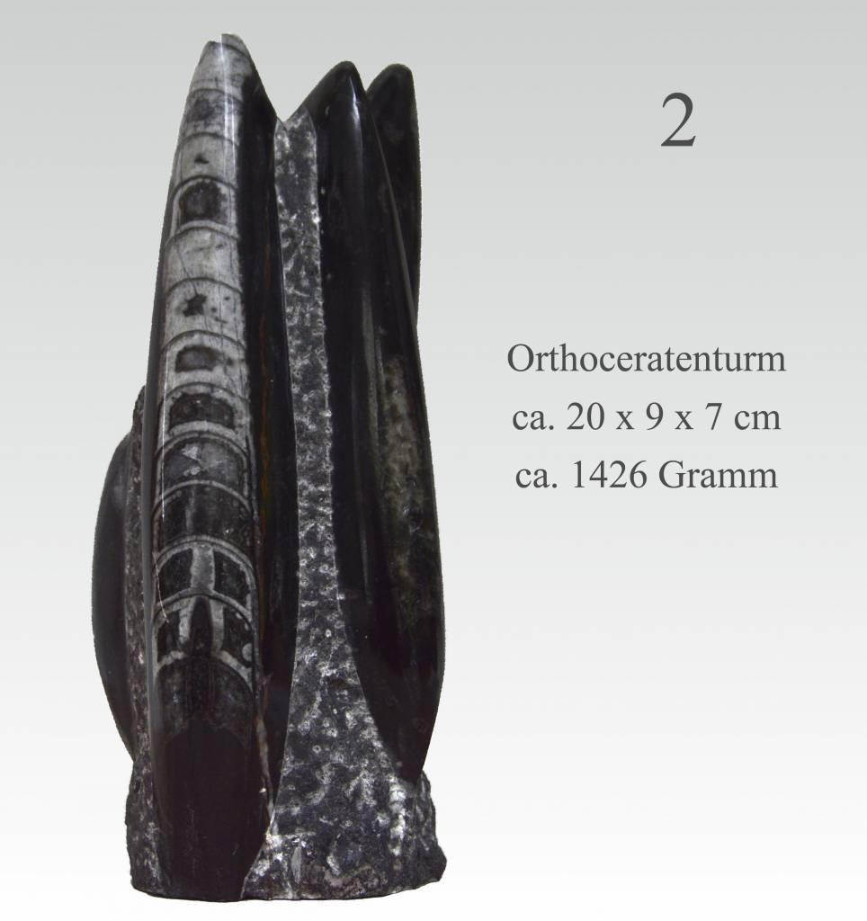 Orthoceraten-Turm