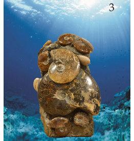 Ammoniten Skulptur ab