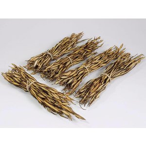 Fire Grass Bunch 30-40cm