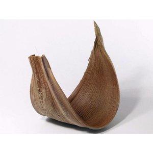 Coco Galera 40-55cm