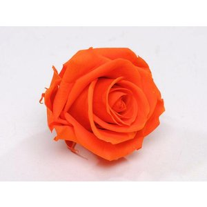 Rozenkop 5cm Oranje