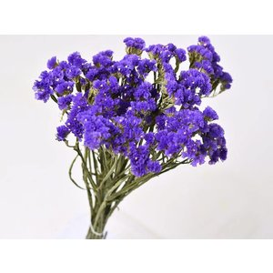 Statice Sinuata 45cm donker Violet