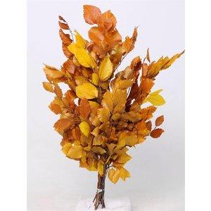 Beukenblad geel 60-70cm