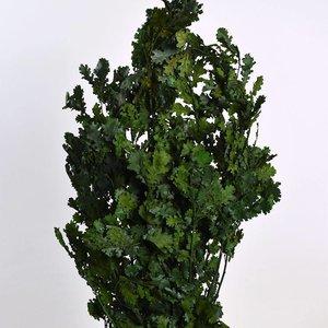 Eikenblad Groen