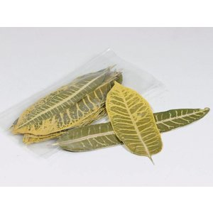 Leaf Stripes 25st. 14-20cm