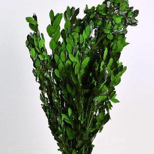 Steeneik Groen 90cm