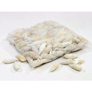 Schelpen Certihium vertagus 1kg