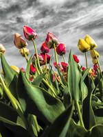 """Frans van Steijn """"Flower Powerrrr"""" op Dibond 120cm"""