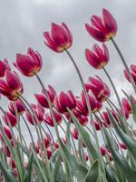 """Frans van Steijn """"Happy Flowering"""" op Dibond 120cm"""