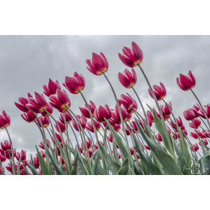 """Frans van Steijn """"Happy Flowering"""" auf Dibond 120cm"""