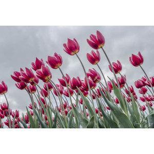 "Frans van Steijn ""Happy Flowering"" on Dibond 120cm"