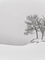"""Frans van Steijn """"Want-To-Tree"""" op Dibond 120cm"""