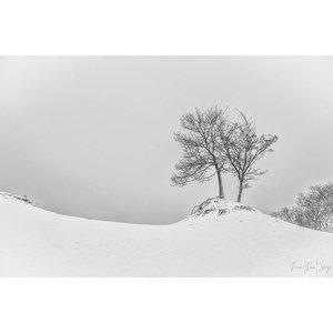 "Frans van Steijn ""Want-To-Tree"" on Dibond 120 cm"