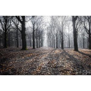 "Frans van Steijn ""Wondering Woods"" on Dibond 120cm"