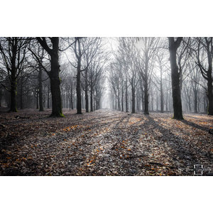 """Frans van Steijn """"Wondering Woods"""" op Dibond 120cm"""