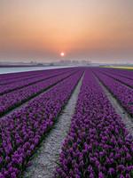 """Frans van Steijn """"Dutch Sunsetttt"""" op Dibond 120cm"""
