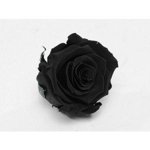 Rozenkop 5cm Zwart