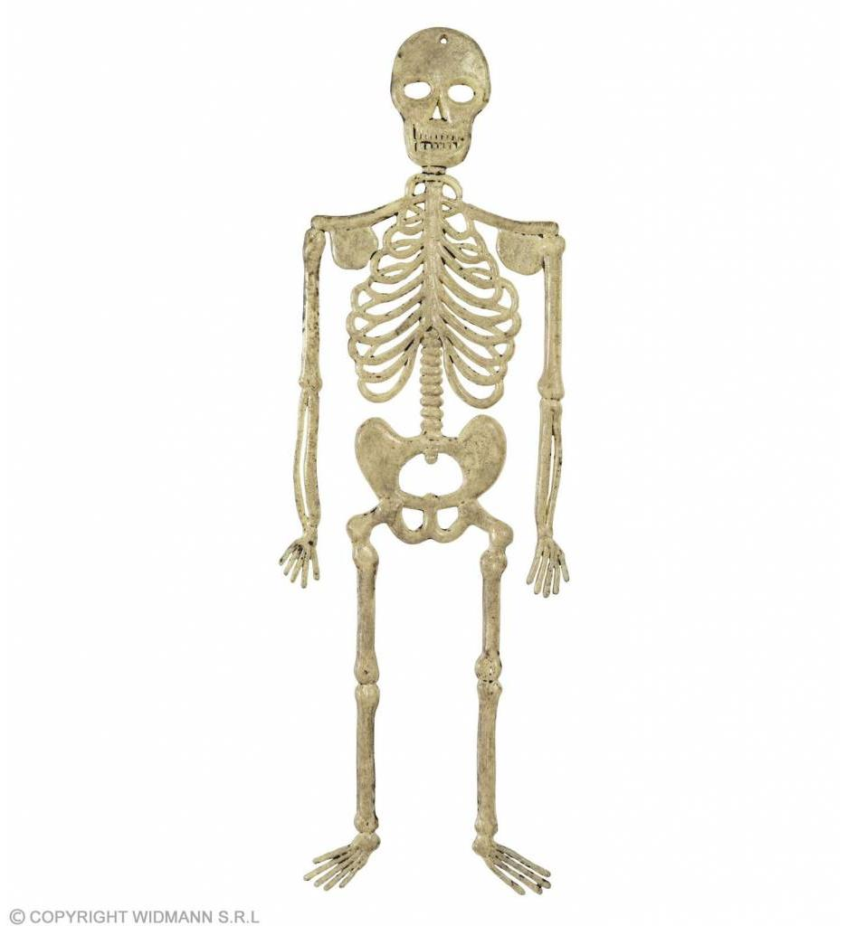Skelet 32Cm