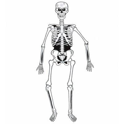 Skelet Decoratie 140Cm