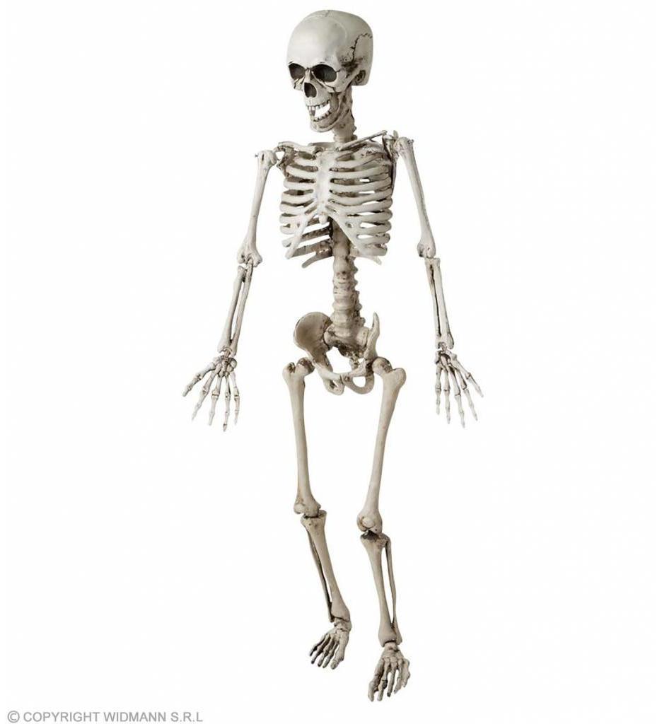 Skelet Luxe Uitvoering 120Cm