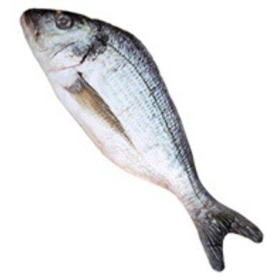 Levensechte Vis 55cm